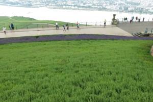 Lavendel vor Strom